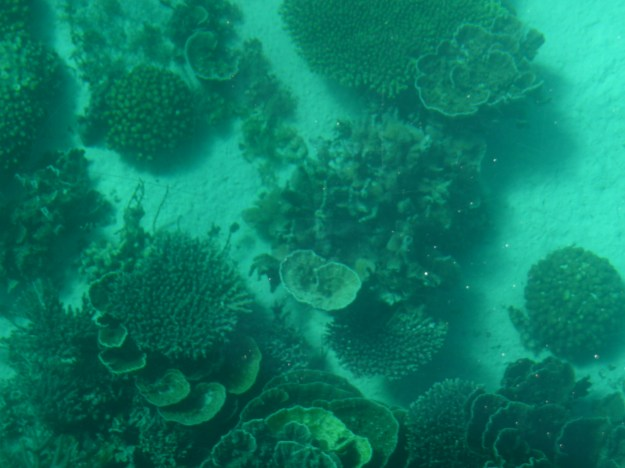 Ningaloo Reef From A Glass Bottomed Boat