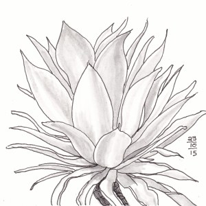 Agave Symmetry - #Inktober 23