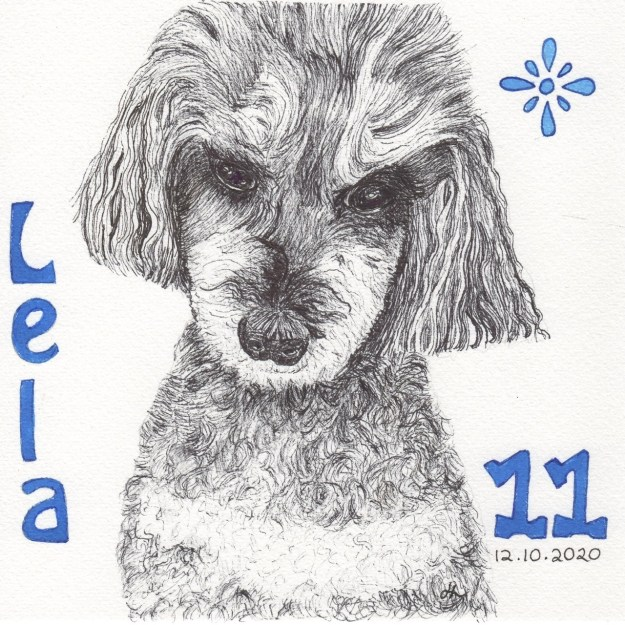 Our toy poodle is a mix of a black and a champagne, known as a phantom. Lela was 11 on the 12th. #Inktober2020 Day 12 - Helen Lock - Western Australian artist