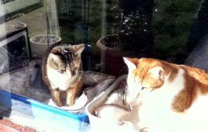 2 cats in window
