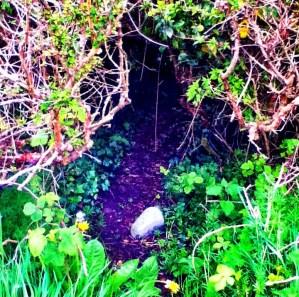 wild rabbits. Image of woodlands