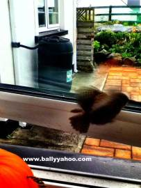 tiny bird fluttering through a window illustrating a children's story about a little bird from Ireland's Ballyyahoo