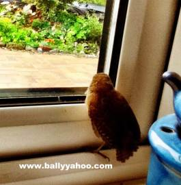 tiny bird on a window ledge illustrating a children's story about a little bird from Ireland's Ballyyahoo