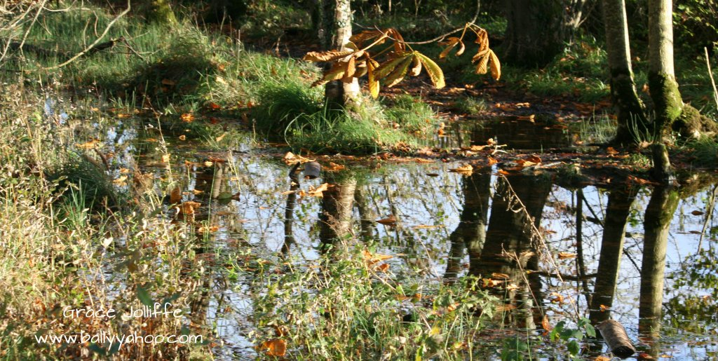 trees reflected on a pond in woodlands - illustrating an Irish children's story about the magic Witchy Woods of Ballyyahoo