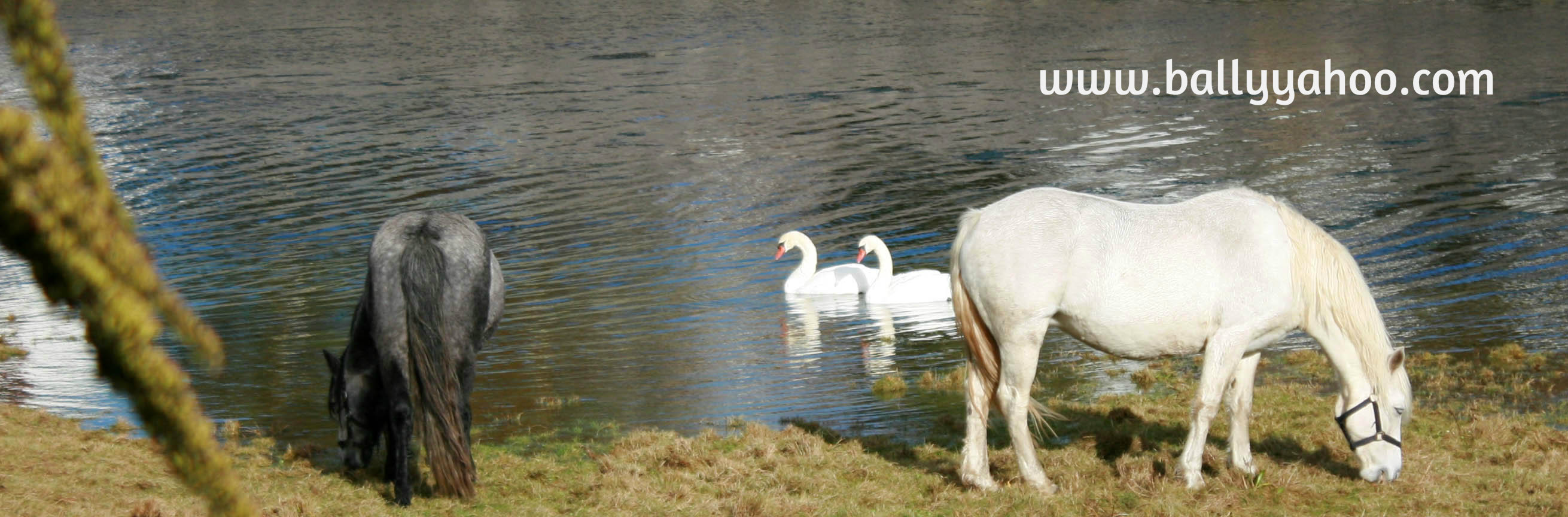 When It Rains It Swans >> Wild Swans Stories About Nature From Ireland S Magic Town Of