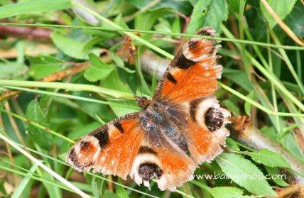 butterfly-on-grass