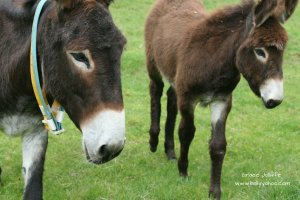 two donkeys walking illustrating children's stories from Ireland's magical town of Ballyyahoo