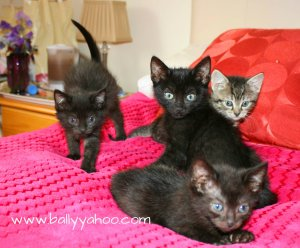 four beautiful kittens illustrating a children's story about black cat appreciation day