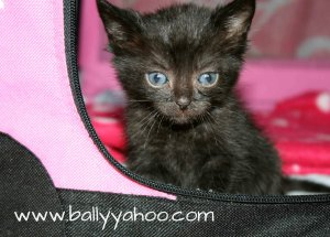 Kitten in a bag illustrating a story about baby kittens