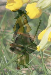 cartoon witch with cowslips illustrating a children's story about nature