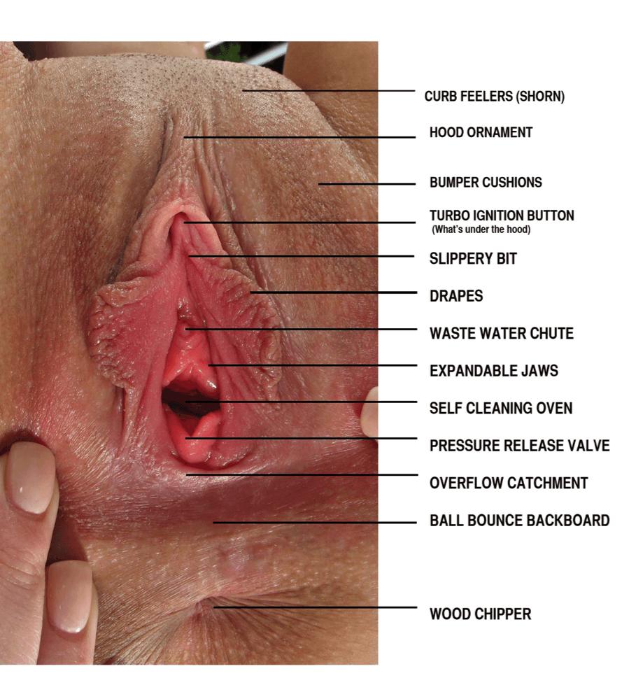 Vagina manual image