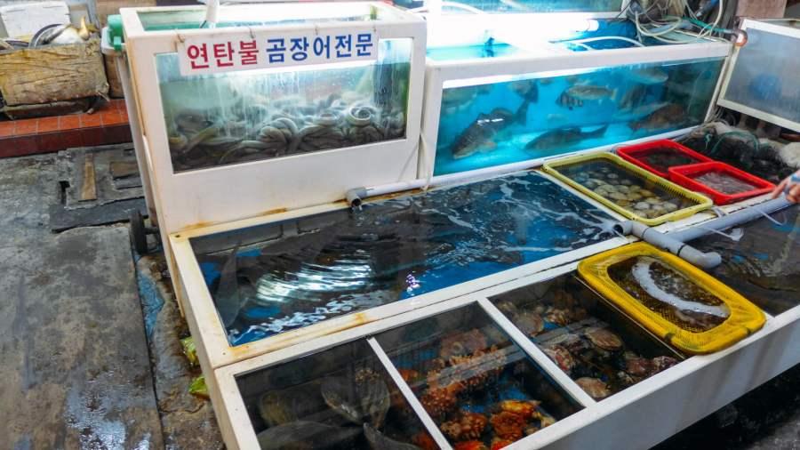 Đủ loại hải sản tươi sống trong hồ
