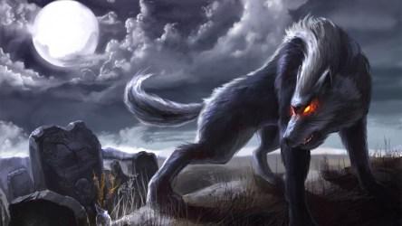 Angry Wolf Wallpaper 1920x1200 63684 Baltana