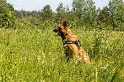 Lithuanian police dog Ramzis killed in action