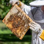 ВИДЕО и ФОТО: президентская пасека дала новый урожай меда