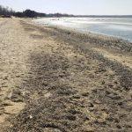 Департамент здоровья: на одном пляже найдена кишечная палочка