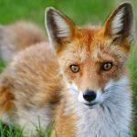 Общество охотников: диких зверей нельзя забирать домой