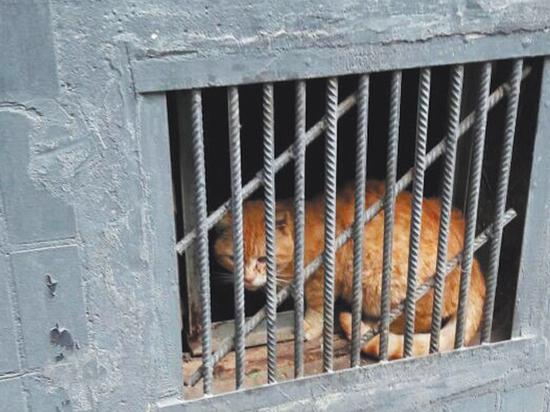 Правительство согласилось оставить кошкам отверстия в подвалах