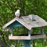 Профессия орнитолог: школьников приглашают на эковебинары о птицах