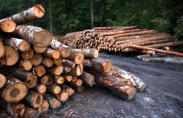 Вырубка лесов ускорилась по всему ЕС, Эстония — не исключение