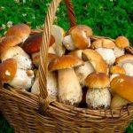 """170 боровиков за прогулку! Латвийцы делятся """"богатыми"""" находками в лесу"""
