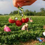 Надо ли безработных насильно гнать на поля убирать урожай?