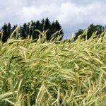Синоптики предупреждают: в субботу в Латвии ветер может ломать деревья