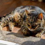 Жестокое убийство кота в Хаапсалу: возбуждено уголовное дело