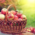 В России отмечают Яблочный Спас
