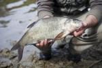 Здесь рыба есть: как поймать леща на резинку