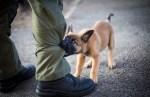 ФОТО: эстонскую полицию усилил щенок Сям — брат Террора