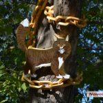 Уголок Кота Учёного появился в украинском Николаеве