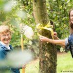 Нарвать и не нарваться: где в Германии можно бесплатно собирать яблоки