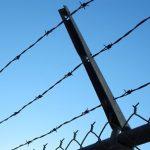 В погранслужбе Литвы сообщили об обстановке на границе с Белоруссией