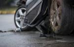 Число аварий с участием диких животных растет