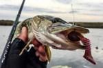 Здесь рыба есть: удача притаилась между корягами