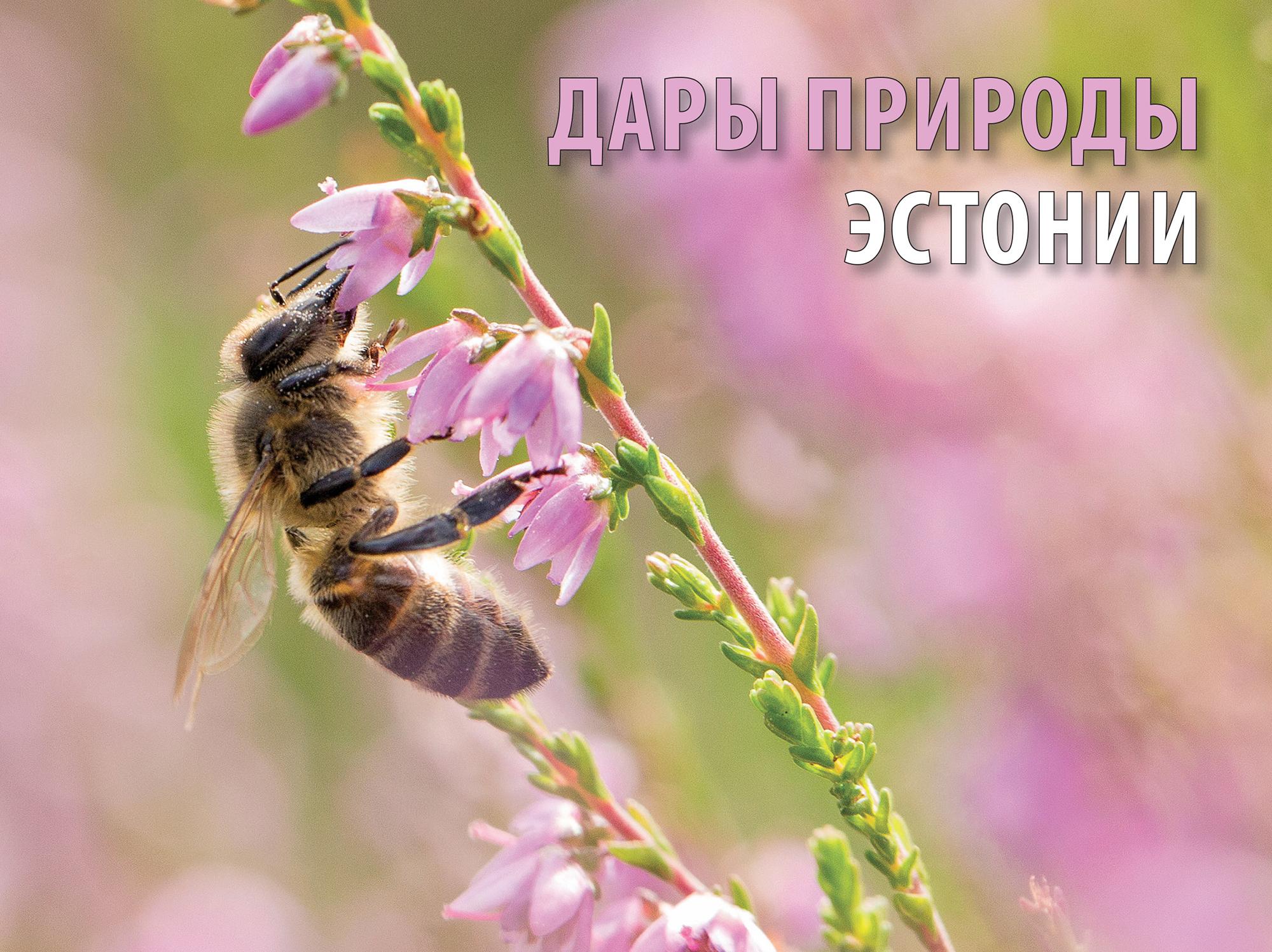 Журнал о природе Эстонии на русском языке можно получить бесплатно (розыгрыш)