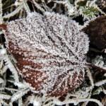 Синоптики рассказали о погоде на понедельник в Латвии