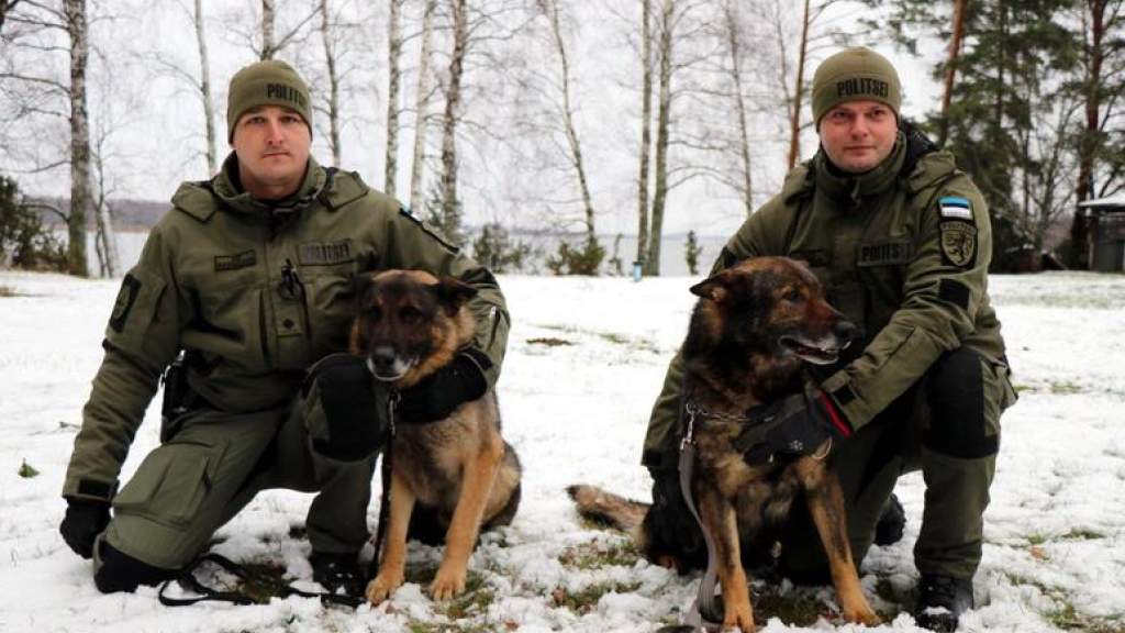 Опытных служебных собак Дику и Фадо проводили на пенсию