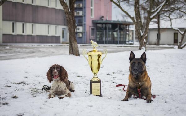 Овчарка Шарки и спаниель Черри стали лучшими служебными собаками года