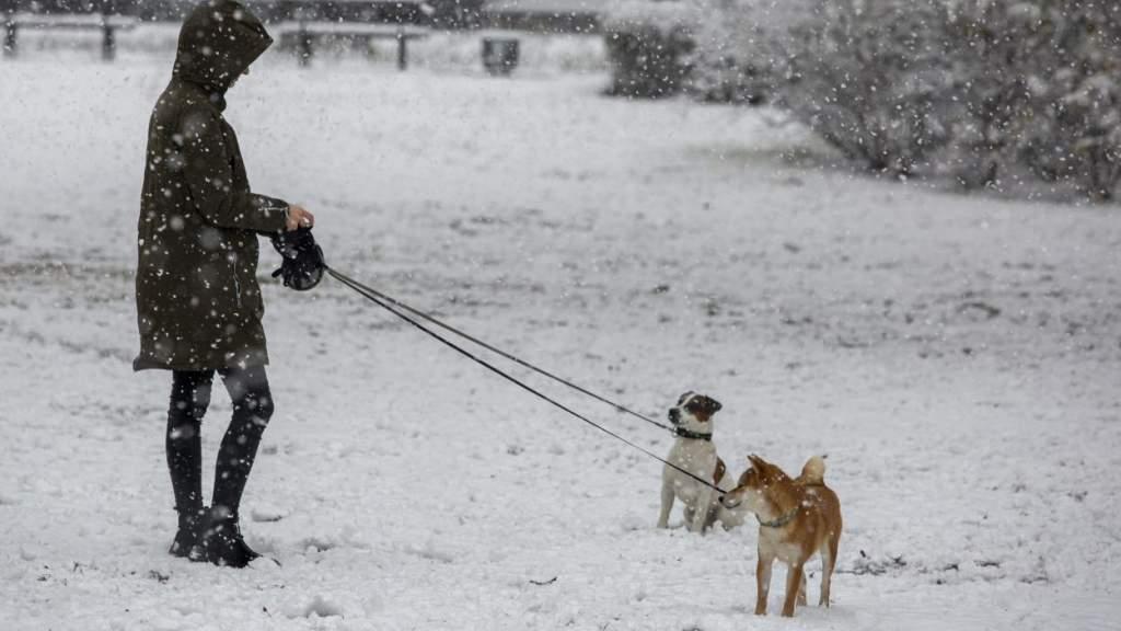 Большая часть Латвии покрыта тонким слоем снега