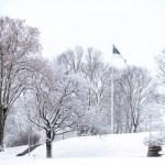 Эстония отмечает день памяти сражавшихся в Освободительной войне
