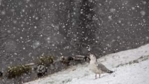 К вечеру среды снегопад усилится