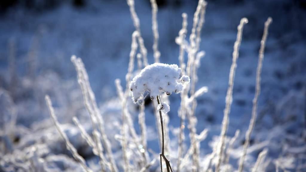 Латвия: температура воздуха опустится ниже -10 градусов