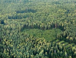 Социалисты предлагают выставить Европе счет за поглощение углекислого газа российскими лесами