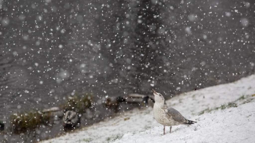 Во вторник в Латвии сильно похолодает, ожидается даже снег