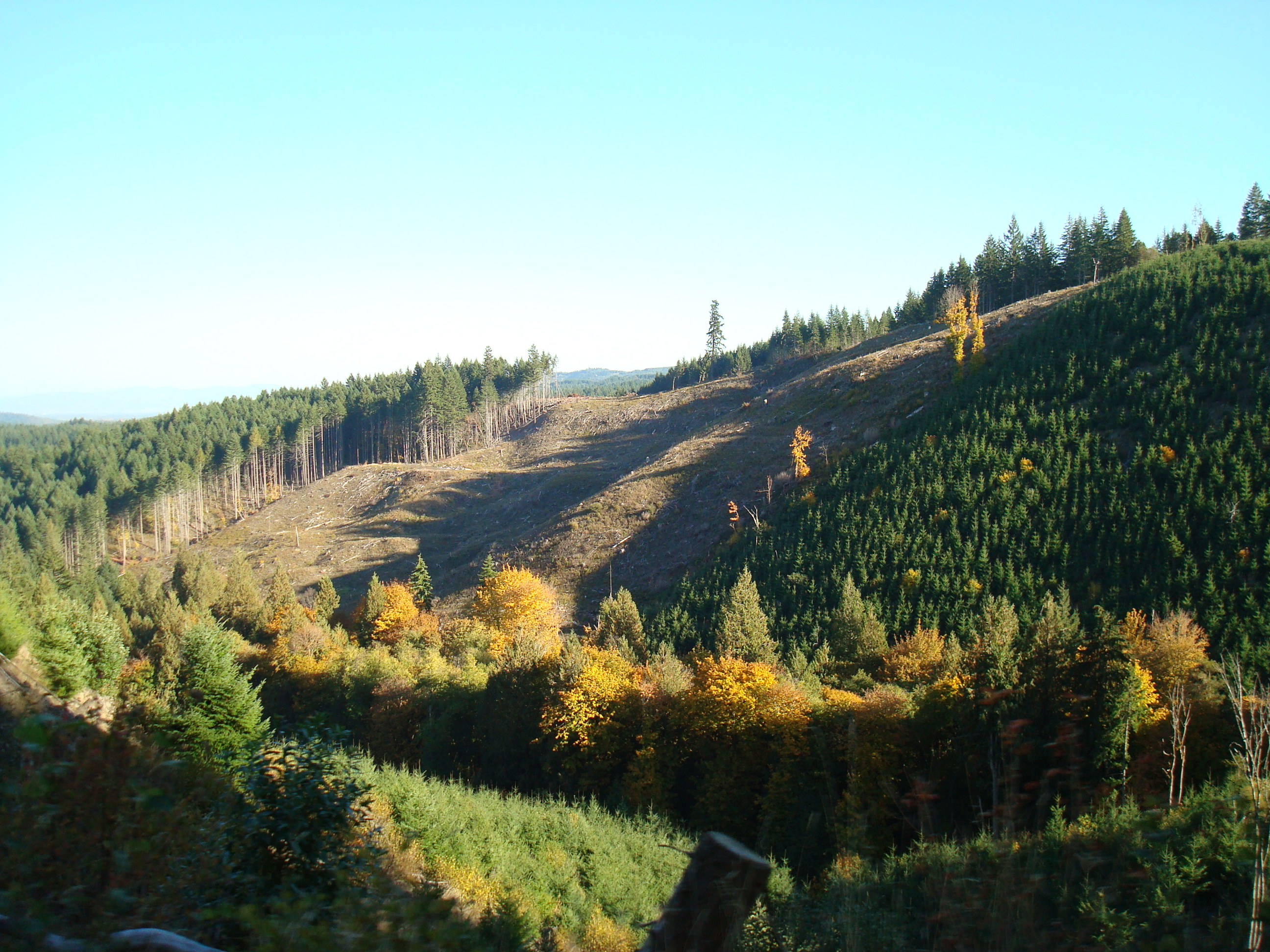Denuded hillside south of Corvallis, Oregon