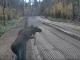 Ohne Visum und Papiere: Dieser Wald-Bewohner flieht aus Weißrussland – VIDEO