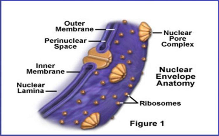 gambar bagian sel tumbuuhan