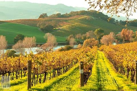Vineyard photography by Frank Gutierrez